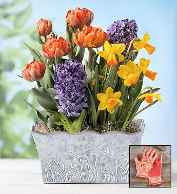 Bountiful Blooms Bulb Garden  Free Gloves