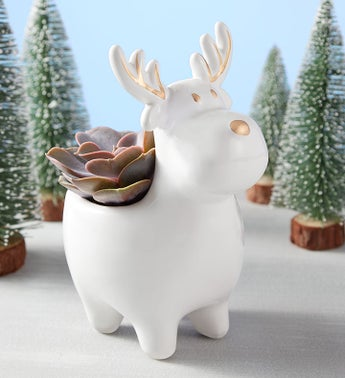 Holiday Reindeer Succulent
