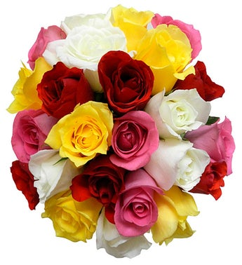Colorful Roses - Larger