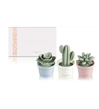 Mini Succulent Pack